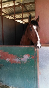 Horsey Picture 5